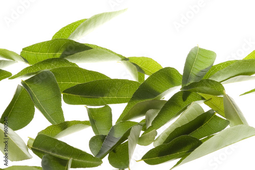 Isolated macro image of curry leaves.