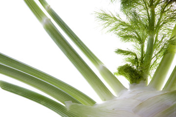 Isolated image of fresh fennel.