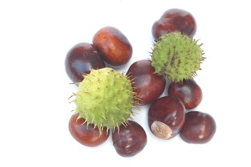 Conkers and shells