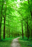 green nature. pathway in the forest poster