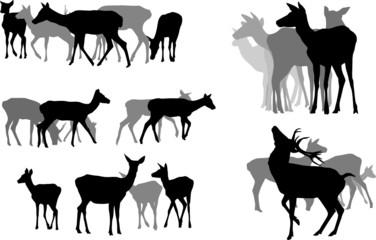 five deer herds, vector collection