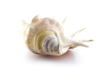 Isolated symmetry sea shell on white background poster