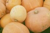 hugh pumpkins poster