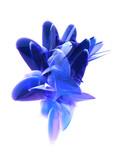 abstrakte blaue kurven