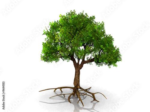 Staande foto Kameleon l'arbre