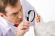Close-up of serious farmer looking at white chicken