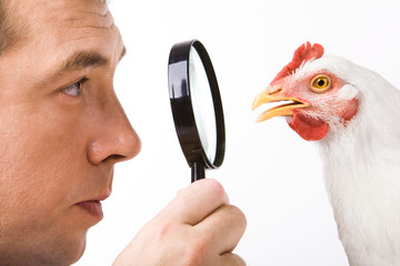 Close-up profiles of man and hen looking at each other