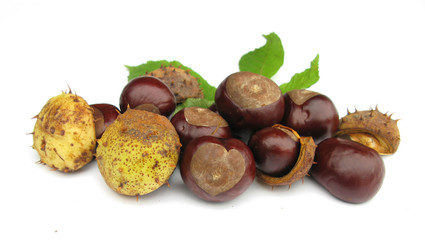 Conkers horse chestnuts with heart