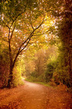 A path leading through a wonderful autumn scene.