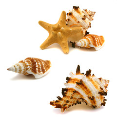 A few cockleshells and starfish on a white background