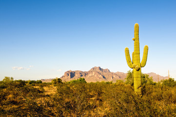 Saguaro with desert mountain background.
