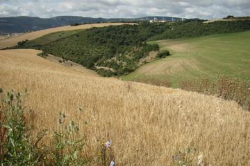 Champ de blé,Aveyron