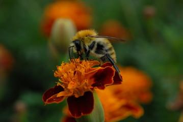L'ape e il fiore 4