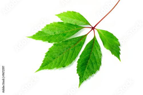 Leinwanddruck Bild blatt, pflanze