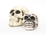 replicas of two human skulls placed on a white background poster