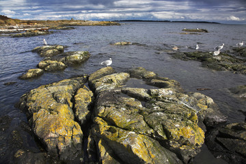 Picturesque coastal rocks covered by a moss and sea birds