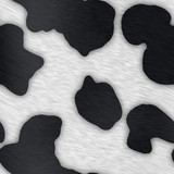 Pattern of a common black and white dairy cow poster