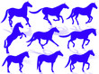 Cavalli in silhouette