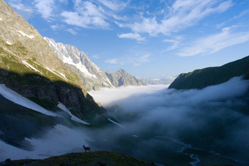 Morning landscape of canyon with clouds and goat on the rock
