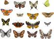 sixteen butterflies