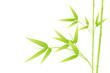 Bambou - image vectorielle -