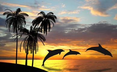 Dolphins near Hawaii
