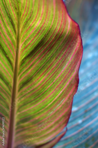 Bright colorful leaf background. Close-up.