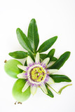 passion flower with fruits and leaves isolated