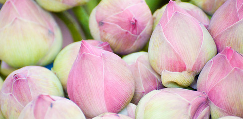 Lotus pour offrande