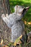 fluffy little playful cat in grass poster