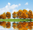 autumn landscape. Trees and lake