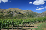 Winery mountain scene in the valleys of Otago, New Zealand