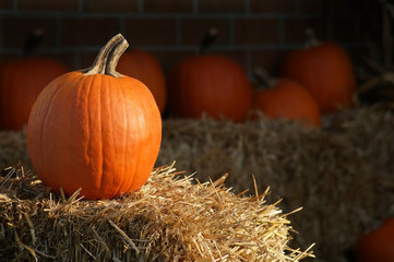 Pumpkin on Straw Against Dark Background