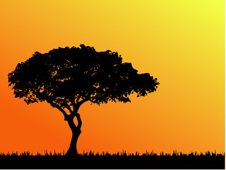 African tree in silhouette