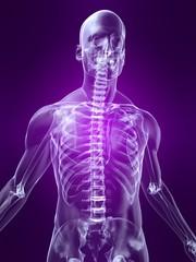 menschlicher torso