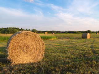 Rolled hay bales at sunset in a Manitoba field 1