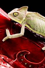 Snakeskin & Chameleon