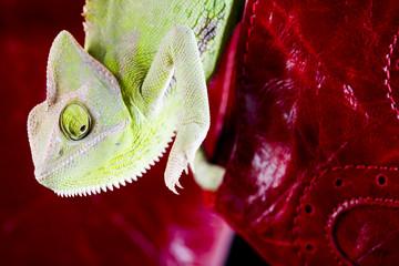 Leather & Chameleon