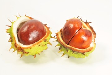 2 Conkers in shells