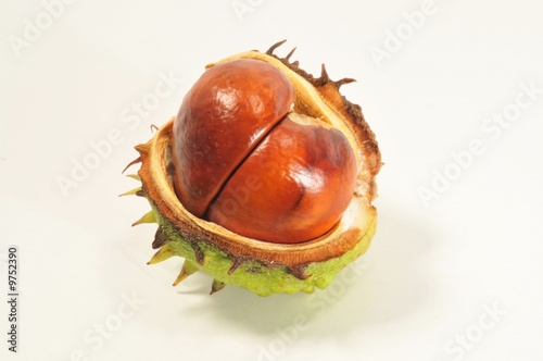 Conker and shell