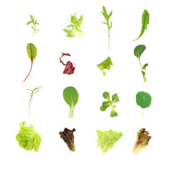 Salad Lettuce Leaf Selection