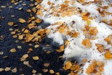 Autumn season. Snow and fall leaves poster
