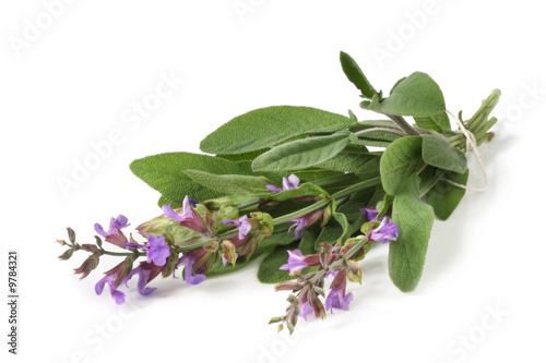 Fresh-picked bunch of flowering sage