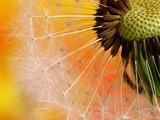 Fototapeta kwitnąć - zbliżenie - Roślinne