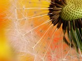 Fototapete Blühen - Closeup - Pflanze