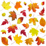 Fototapety Autumn leaves on a white background...
