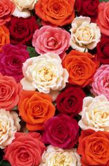 lit de roses