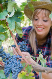 Fototapety Young woman peasant who looks the grapes in the vineyard