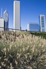 Chicago skyscrapers from Millenium Park.