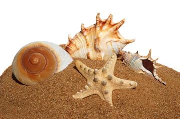 Seashells on a sand background